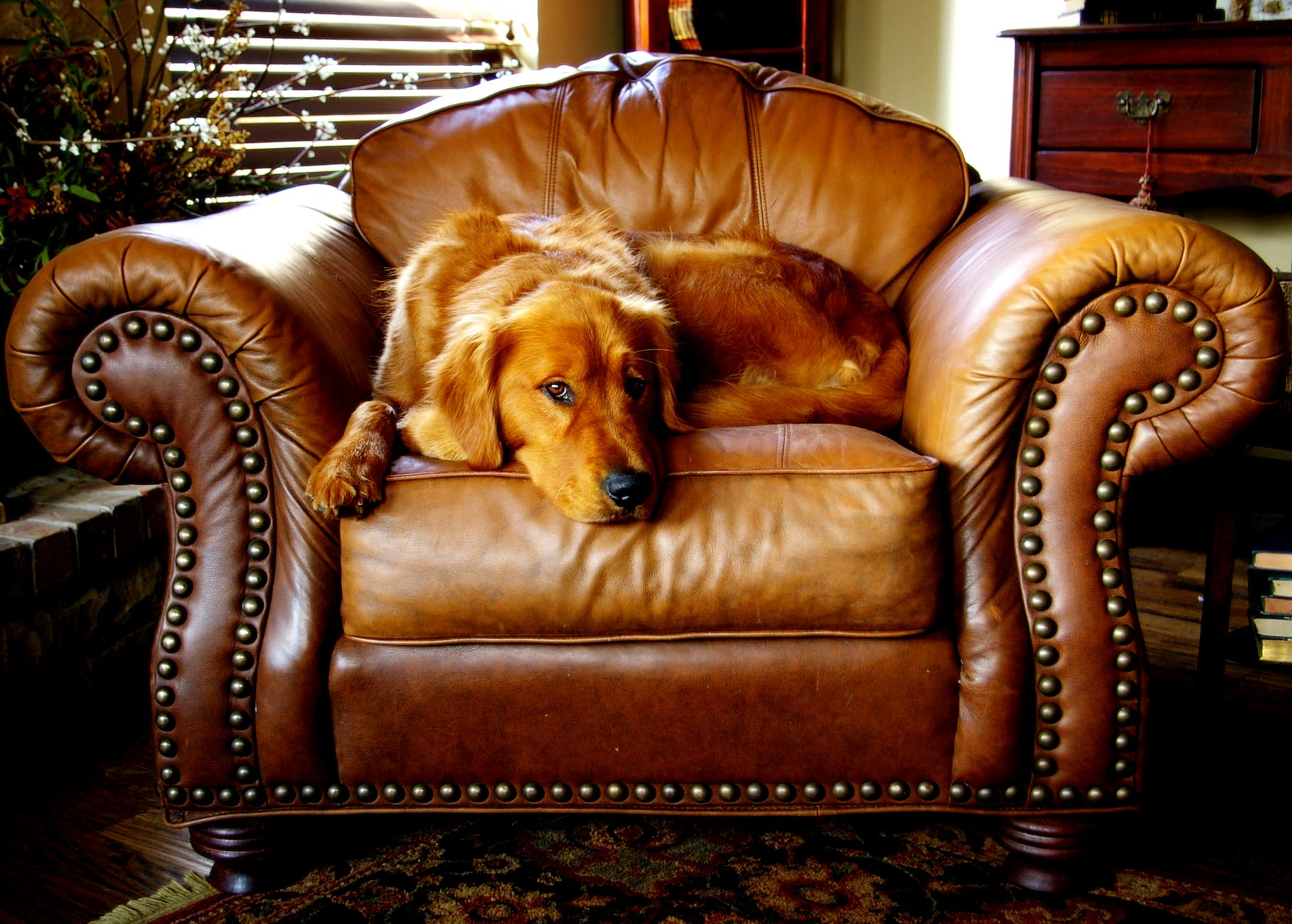 canine chair cushion dog